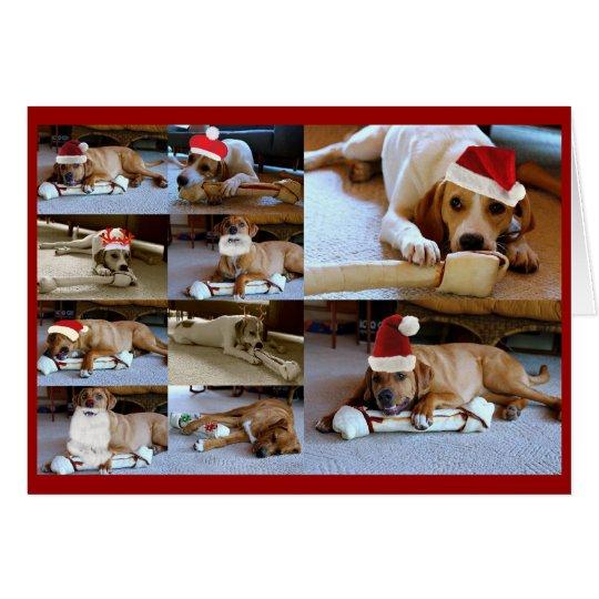 Laura-Hunde Karte