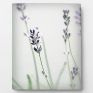 Lavendel-Blumen Fotoplatte