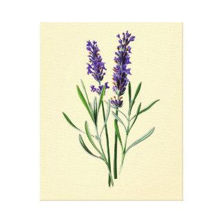 Lavendel-Blumen Leinwanddruck
