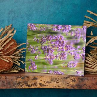 Lavendel Fotoplatte