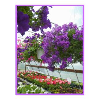 Lavendel-Verbene-lila Petunien Postkarte