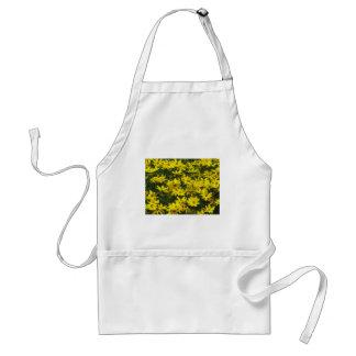 Le Coreopsis jaune fleurit le tablier