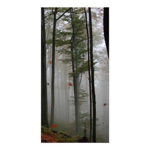LE FEUILLE MYSTÉRIEUX D'ARBRES FORESTIERS TOMBE CO CARTES AVEC PHOTO