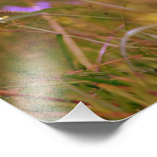 Le ressort fleurit l'élargissement impression photographique