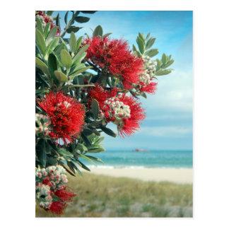 Le rouge fleurit l'été de la Nouvelle Zélande de Cartes Postales