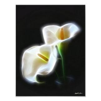 Le zantedeschia élégant fleurit la copie 13 modern photo