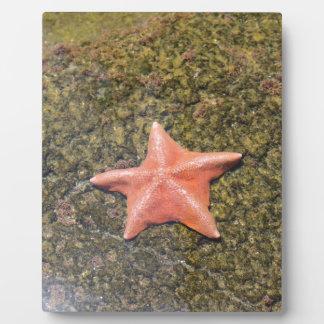 Lebenstarfish.JPG Platten
