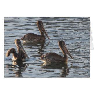 Leere Anmerkungs-Karte--Pelikane Karte