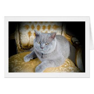 Leere Gruß-Karte: Mürrische graue Katze! Karte