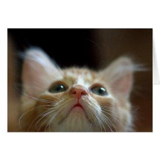Leere Karte mit entzückendem orange Tabby-Kätzchen