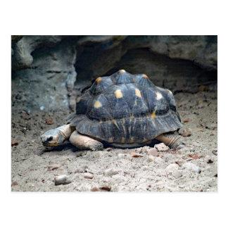 Leere Postkarte der Schildkröten-7166