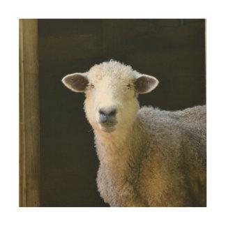 Leichte Schafe Holzdruck