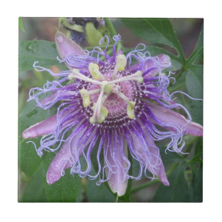 Leidenschafts-Blume Keramikfliese