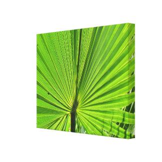 Leinwand-Druck - Palmen-Wedel Gespannter Galerie Druck