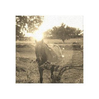 Leinwand-Pferdebilder Leinwanddruck