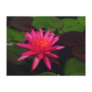 Leinwanddruck - rosa Wasserlilie