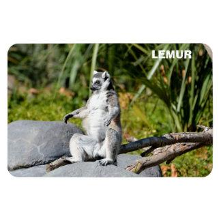 Lemur-Affe Magnet