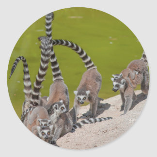 Lemur am Zoo Runder Aufkleber