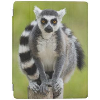 Lemur iPad Hülle