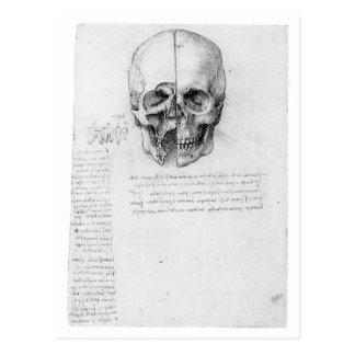 Leondardo Da Vinci Schädel 002 Postkarte
