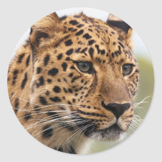 Leopard-Foto Runder Aufkleber