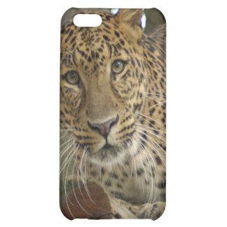 Leopard-Speck-Kasten