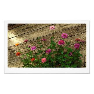 Les fleurs d'Abby Impressions Photo