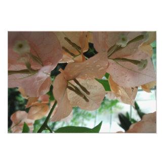 Les fleurs roses se ferment photo d'art