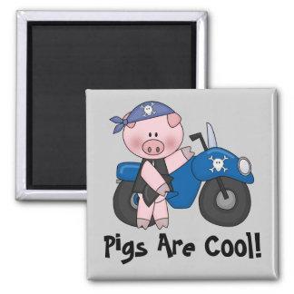 Les porcs sont frais magnet carré