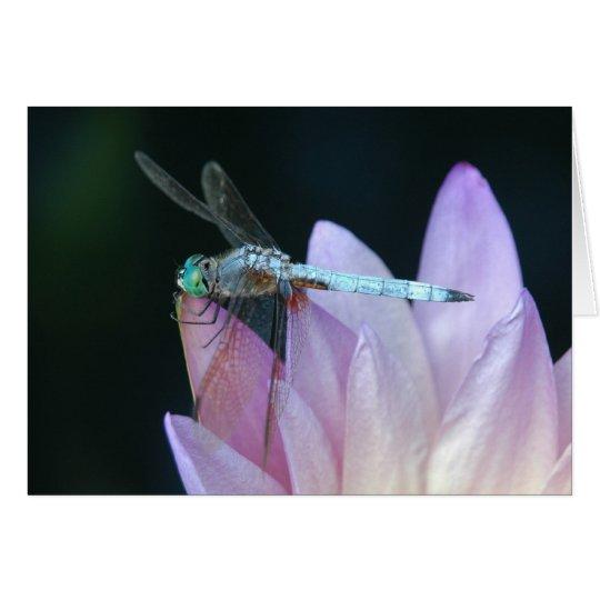 Libelle 1 grußkarte
