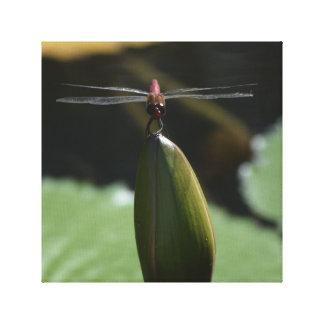 Libelle auf einer Wasserlilie Leinwanddruck