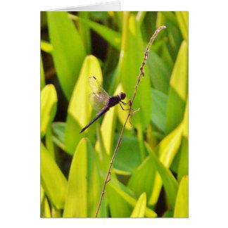 Libelle blau und schwarz auf Gras Karte
