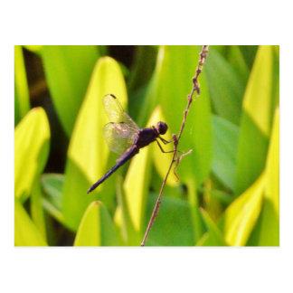 Libelle blau und schwarz auf Gras Postkarte