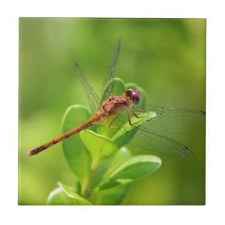Libelle gelandet auf grüner Garten-Pflanze Kleine Quadratische Fliese