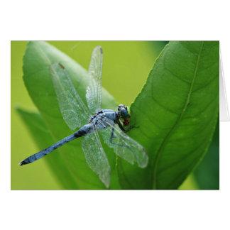 Libelle Grußkarte