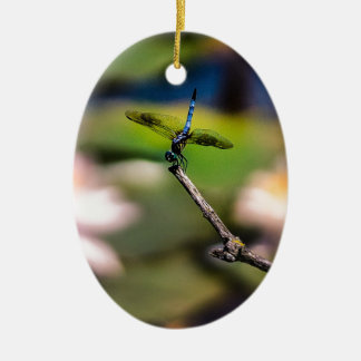 LibelleHandstand durch Erina Moriarty Fotografie Ovales Keramik Ornament