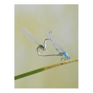 Libellen in der Liebe Postkarte
