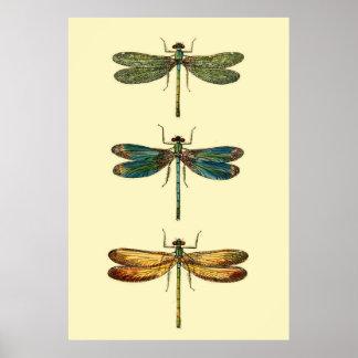 Libellen-Insekten-Sammlung Poster