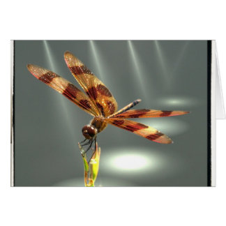 Libellen-Nahaufnahme-Foto-Zeit, - Geburtstag zu Karte