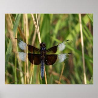 Libellen-Schönheit - Natur-Insekt Poster