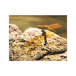 Libellesun-Baden Leinwanddruck