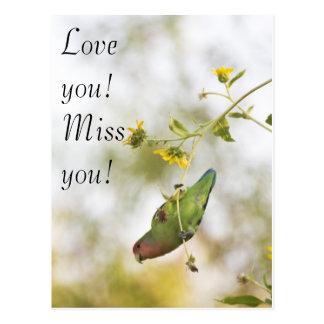 Liebe verfehlen Sie, Sie Lovebird Postkarte