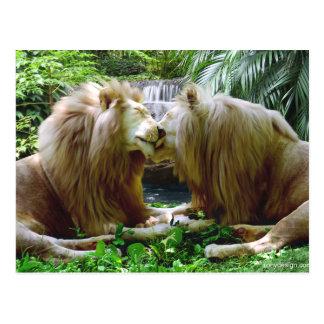 Liebevolle Löwen Postkarte