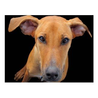 Liebevoller Jagdhund Postkarte