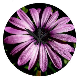Lila Aster-Blume der Wanduhr