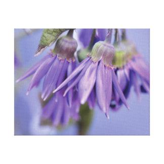 Lila Blume des schönen Nahaufnahme-Fotos auf Blau Leinwanddruck