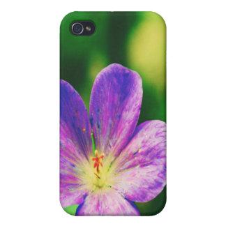 Lila Blumen iPhone 4/4S Cover