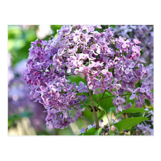 Lila Blumen Postkarte