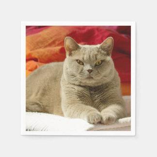 Lila britische shorthair Katze Servietten