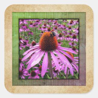 Lila Coneflower Echinacea-Wildblume-Aufkleber Quadratischer Aufkleber